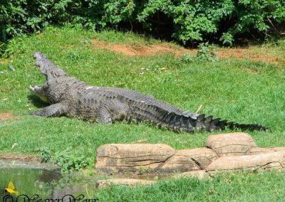 Crocworld Conservation Centre 4