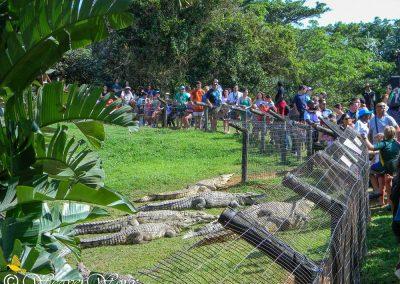 Crocworld Conservation Centre 5
