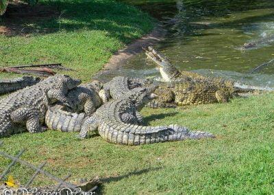 Crocworld Conservation Centre 6