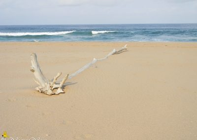 Elysium Beach 2