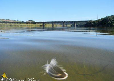 Mtwalume River 14