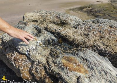 Mzamba Fossils and Petrified Forest 3