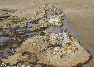Mzamba Fossils and Petrified Forest 4