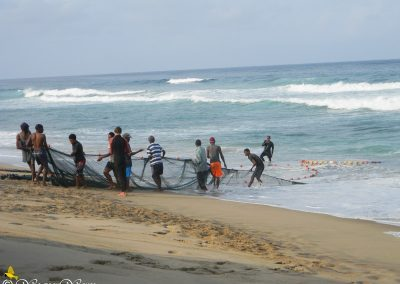 Sardine Run - Elysium Beach 2